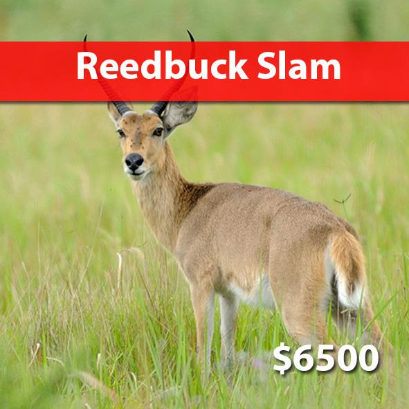 Reedbuck Slam Package
