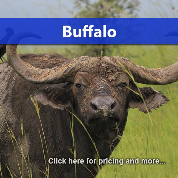 Buffalo Package